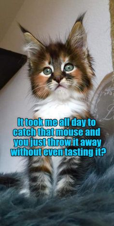 What a waste..... http://cheezburger.com/9080187648 - Tap the link now to see all of our cool cat collections!