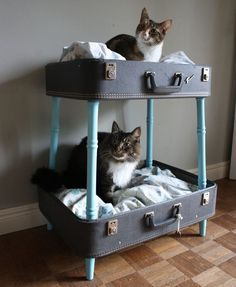 Vintage suitcase bunk pet -bed. I would think you could also turn them the other way and use as a table.