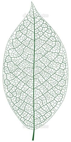 vector Foto Macro, Gond Painting, Leaf Skeleton, Stitch Drawing, Mandala Doodle, Geometric Drawing, Botanical Drawings, Patterns In Nature, Wire Art