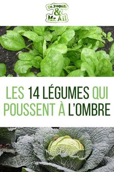Potager garden 826480969105551052 - The 14 vegetables that grow in the shade of your vegetable patch Source by apdullahkoc