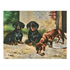 Dachshund Puppies Postcard   dachshund t shirts, dachshund tattoo ideas, dachshund mix #dachshundsdownunder #dachshundshop #dachshundsmaketheworldbetter