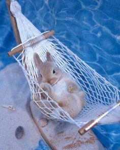 Bunny in a hammock. ..what could be sweeter ❤