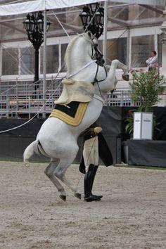 Vienna Masters: Bilder vom Training...
