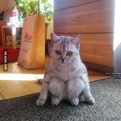 I've never seen a cat sit like this before.