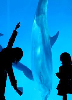 Port of Nagoya Public Aquarium, Aichi, Japan