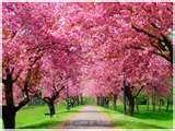 Trees galore