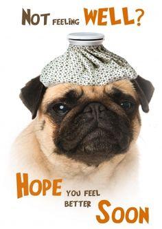 Grumpy dog mopshond beterschap kaart (@Karen van Gerner Fotografie)