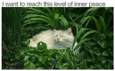 16 Funny Animal Pics for Your Tuesday | Love Cute Animals