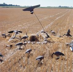 10 Flagging Techniques That Will Entice Ducks and Geese | Wildfowl