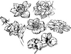 drawing: black and white drawing of beautiful composition of flowers Illustration