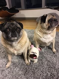 Pug in the middle is the brightest of the bunch http://ift.tt/2r67NBg