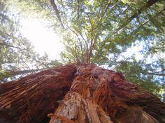 redwood infinity
