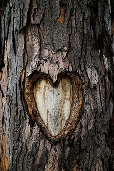 Carved heart in tree.                                                       …