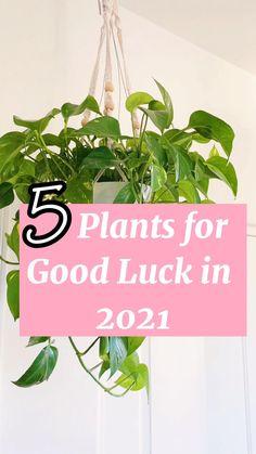Easy House Plants, Balcony Plants, House Plants Decor, Patio Plants, Plant Decor, Outdoor Balcony, Cat Safe House Plants, House Plants Hanging, Popular House Plants