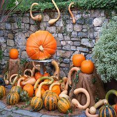¡YA ESTÁN AQUÍÍÍÍÍÍÍÍÍÍ!  #CALABAZAS Y #CALAVERAS #JardínBotánicoAtlántico #Gijón 22 OCTUBRE - 1 NOVIEMBRE  #DíadeDifuntos #1Noviembre #Otoño #Autumn #Fall #Xixón #Asturias #Asturies #AsturiasConSal #NorthernSpainWithZest #Jardín #Botánico #Atlántico #Atlantic #Botanic #Garden