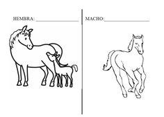 Piruleta colorines: PROYECTO LOS CABALLOS Moose Art, Horses, Blog, Animals, Chocolate, School Projects, Human Body Activities, Christmas Activities, Animales