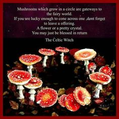Fairy magic, my yard as a child used to have fairy rings often! I shall hand make or fashion a gift for the fairies at the fairy ring near my Willow tree and place it within the fairy ring next time I visit the Japanese gardens. Wiccan Spell Book, Wiccan Spells, Fairy Spells, Norse Pagan, Mushroom Circle, Fairy Ring, Eclectic Witch, Baby Witch, Kitchen Witch