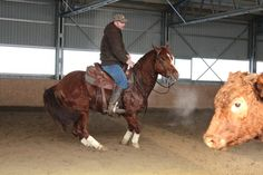cutting horse training Slovakia