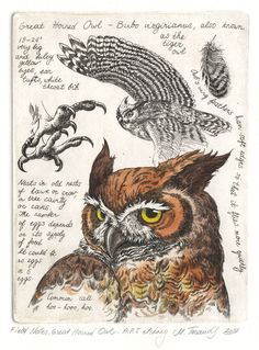 Field Notes, Great Horned Owl  by Marina Terauds, etching