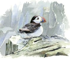 ARTFINDER: The Puffin  by David Holliday - The Northumberland coast is a haven for wildlife. Every summer I take a boat out to the Farne Islands to study the sea birds and grey seals. When painting wi...