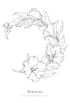 Hibiscus flower drawing - this botanical illustration features a graceful wreath of hibiscus flowers, showcasing the pattern of their lifecycle. The upward arch symbolizes life and growth. Flower Drawing Tutorials, Flower Sketches, Art Sketches, Flower Drawings, Art Drawings, Hibiscus Flower Drawing, Floral Drawing, Hibiscus Flowers, Peony Drawing
