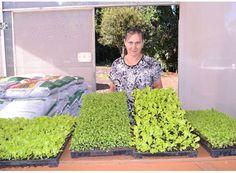 Paraíso começa distribuição mudas de hortaliças. http://www.passosmgonline.com/index.php/2014-01-22-23-07-47/geral/5192-paraiso-comeca-distribuicao-mudas-de-hortalicas