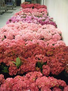 Pink Flowers 2 C