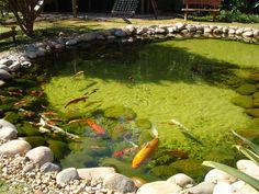 lagos ornamentais - Pesquisa Google