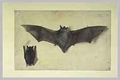 Œuvre gouaché et aquarellé d'Albrecht Dürer - Wikiwand