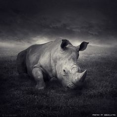 Craig Rhodes - Producer.  A very deep and emotional pic with a great evening sky above this resting Rhino. | Every 15 Minutes we lose another rhino to poaching.