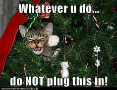 Funny!! For more Christmas cats, visit http://Facebook.com/funholidaycats