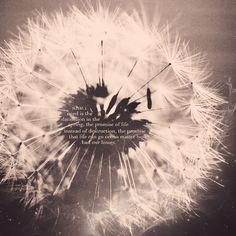 what i need is the dandelion in the spring  The bright yellow that means rebirth instead of distruction.  The promise that life can go on, no matter how bad our losses.