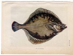 1907 the sea shore original antique sea life by antiqueprintstore