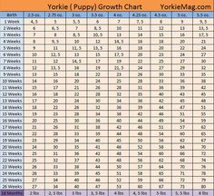 Yorkie Growth Chart  Dogs    Growth Charts Yorkie