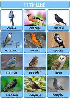 Learning Languages Tips, Album, Bird, Animals, Animales, Animaux, Birds, Animal, Animais