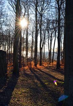 UNESCO Weltkulturerbe an der Ostsee - Buchenwald im Nationalpark Jasmund auf Rügen  #jasmund #kreidefelsen #ruegen #unesco #ostsee #buchenwald #nationalpark