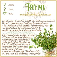 ~ Thyme ~ This herb has been used for healing - both physical and metaphysical - throughout the ages. Before antibiotics, thyme oil was applied to bandages to act as an antiseptic. Its active ingredient, Thymol, is still used in mouthwashes. Magic Herbs, Herbal Magic, Witch Herbs, Green Witchcraft, Eclectic Witch, Kitchen Witchery, Healing Herbs, Medicinal Plants, Book Of Shadows