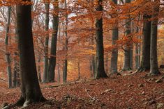 History of the forest in Central Europe Temperate Deciduous Forest, Nature Aesthetic, Biomes, Central Europe, Czech Republic, Continents, Geography, Tourism, Scenery