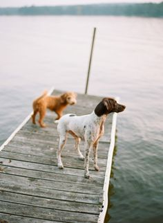 puppies on the pier Animals And Pets, Baby Animals, Cute Animals, Dog Tumblr, Dog Photography, Four Legged, Appaloosa, Mans Best Friend, Dog Life