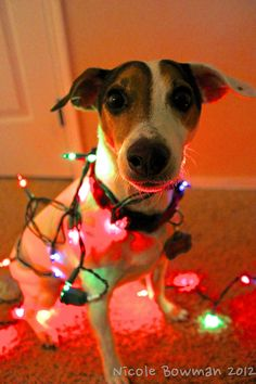 #pinitforpetsmart    For every holiday pet photo we receive from Pinterest with the #pinitforpetsmart hashtag, $25 will be donated to PetSmart Charities® to help save the lives of homeless pets.