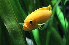 The 6 Best Freshwater Aquarium Fish for Beginners: http://ourlives.me/the-6-best-freshwater-aquarium-fish-for-beginners/