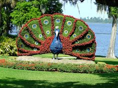 Peacock Plant Sculpture by Red Dog 3D, via Flickr