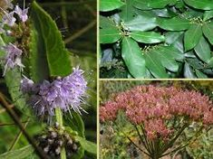 Image result for wild plants north america