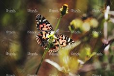 Colorful butterfly in the grass