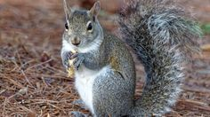 It's squirrels, not cyber-attacks, that pose the real threat to critical infrastructure systems, says one security expert.