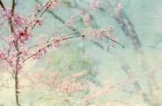 dream of spring  film photography print by eveneve