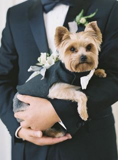 The most adorable suited up Yorkie! Photography: Jen Huang - JenHuangPhoto.com   Read More on SMP: http://www.stylemepretty.com/2016/09/26//