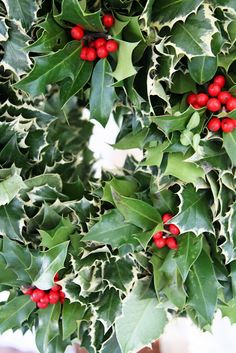 I always have an Oregon holly wreath on my door at Christmas! Noel Christmas, Merry Little Christmas, Green Christmas, Country Christmas, All Things Christmas, Winter Christmas, Christmas Wreaths, Christmas Decorations, Christmas Berries