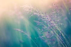 summer sunlight shining through tall grass I colourful bokeh I plants and nature photography inspiration I calm