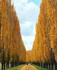 to autumn imagery